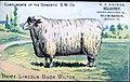 1881 - W F Hecker - Trade Card - Allentown PA.jpg