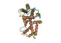 1D9C Bovine-Interferon-Gamma02.png