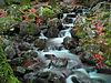 2012-11-23 16-05-52-grande-cascade-tendon.jpg