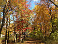 2014-10-30 12 30 10 Trees during autumn in the woodlands along the West Branch Shabakunk Creek in Ewing, New Jersey.JPG