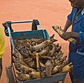 2015.06-430-122ap vendor,meat(cattle foot,tail),cutting Belleville,Bobo-Dioulasso,BF thu11jun2015-1641h.jpg