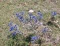 293 Monte Subasio (3909778844).jpg