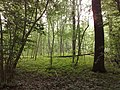 3981 Bunnik, Netherlands - panoramio - Alexandros Georgiou (23).jpg