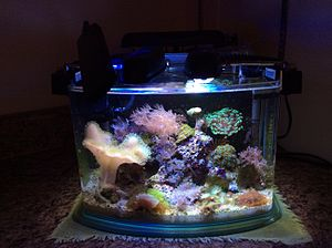 Reef aquarium - 14 litre (3 gallon) nano reef containing small and large polyped stony corals, as well as various soft corals