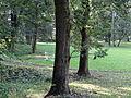 615774 pow krakowski gm Czernichow Czernichow dwor park 14.JPG