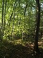 74160 Neydens, France - panoramio (1).jpg