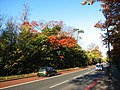 A21 in Autumn - geograph.org.uk - 870021.jpg