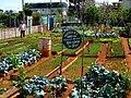 AJM 034 Havana urban agriculture business.JPG