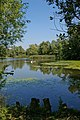 A Belhus Park Pond - geograph.org.uk - 536344.jpg