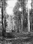 A Dorrigo Forest (4903270703).jpg