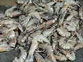 A close-up of Prawns.JPG