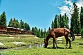 A horse grazing in the fields of Faury Meadows.jpg
