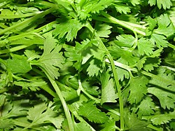 A scene of Coriander leaves.JPG