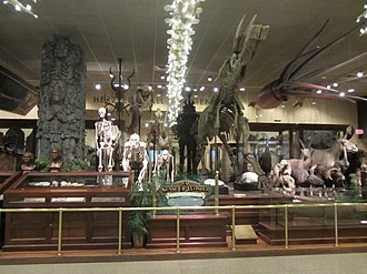 """Milwaukee Public Museum - """"A Sense of Wonder"""" in the first floor lobby, done in the style of the early museum"""