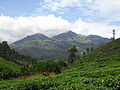 A view from chundel, wayanad.JPG