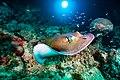 Abrolhos Marine National ParkRobertoCostaPinto24.jpg