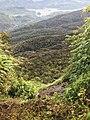 Adam's peak Forest.jpg