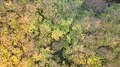 Aerial view of trees in Pacific Spirit Park, BC.jpg