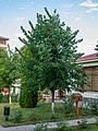 Afra Hotel, Oğuz (P1090473).jpg