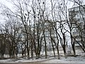 After icing, Odessa Oblast, Ukraine 06.JPG