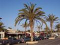 Agadir palms.png