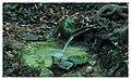 Agua de bosque - panoramio.jpg