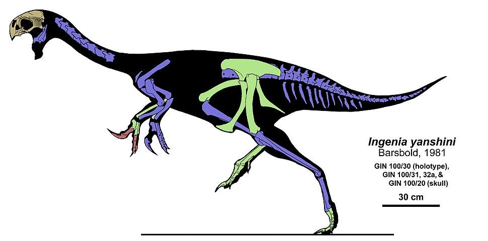 Ajancingenia yanshini skeleton