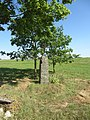 Alantos sen., Lithuania - panoramio (14).jpg