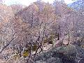 Aliseda Rio Robledillo 2012-1-29 SierraMadrona.jpg