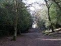 All's quiet in Upper Nut Hurst - geograph.org.uk - 1755297.jpg