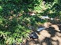 All Hallows Church Tottenham London England - churchyard dumped rubbish 1.jpg