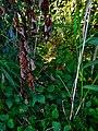 Alto Adige Suedtirol Biotopo Rio dei Gamberi Krebsbach photo by Giovanni Ussi - 39.jpg
