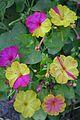 Amazing flowers Aghdam, Azerbaijan Rafael Guliyev's garden.jpg