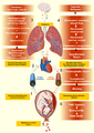 Amniotic fluid embolism.png
