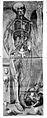 Anatomie de parties...l'homme et de la femme, 1773 Wellcome L0019146.jpg