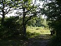 Andrew's Wood nature reserve - geograph.org.uk - 242471.jpg