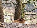 Animal Parcours 04.jpg