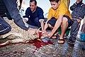 Animal sacrifice at Eid at Adha 12.jpg