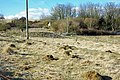 Ant hills - geograph.org.uk - 1736253.jpg
