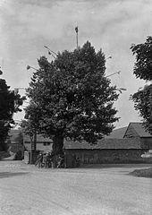 Arbor tree, Aston on Clun