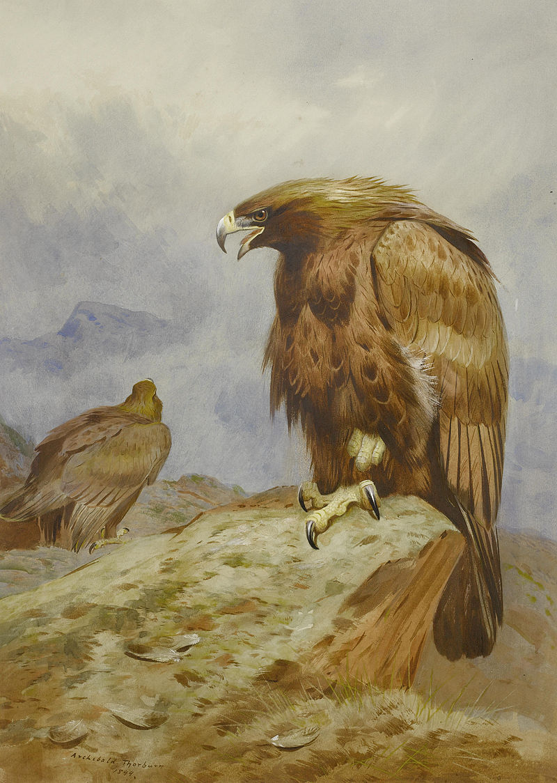 Archibald Thorburn, Pair of Golden Eagles. Bonhams.jpg