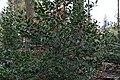Around Eulenstein 2020-03-14 03.jpg