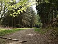 Asheltor Wood - geograph.org.uk - 418877.jpg
