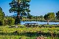 Ashurst Lake (36911142754).jpg