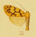 Asura percurrens Hampson 1915.png