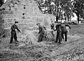 Atc Boys Lend a Hand on the Land- Agriculture in Wartime, England, UK, 1944 D21252.jpg