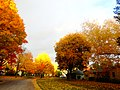 Autumn Colors in Madison - panoramio (12).jpg