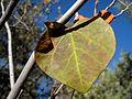 Autumn Survivor (3086583474).jpg