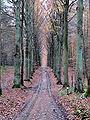 Autumnforest.jpg