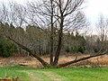 Awkward Tree (4086675811).jpg